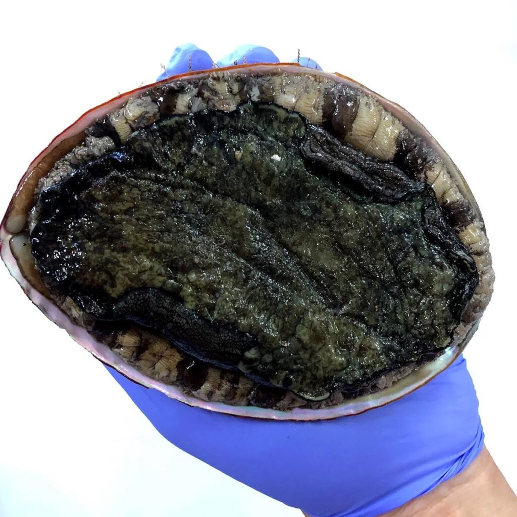 Kyushu is famous for their sweet abalone that live of its rich coasts. Freshly caught and farmed Japanese abalone off the coast of Kyushu are extremely sweet and melt in your mouth. Best eaten as sashimi, on the grill or in the BBQ.