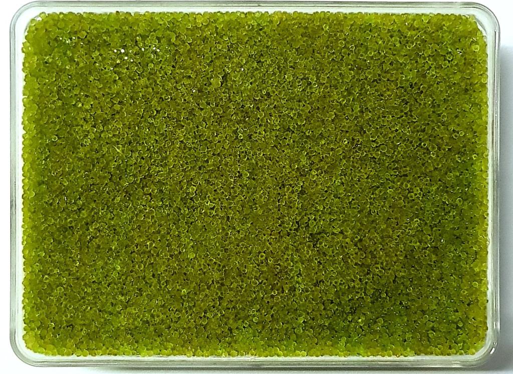 Shiki delivery singapore Premium Japanese Green Wasabi Tobiko (Flying Fish Roe)