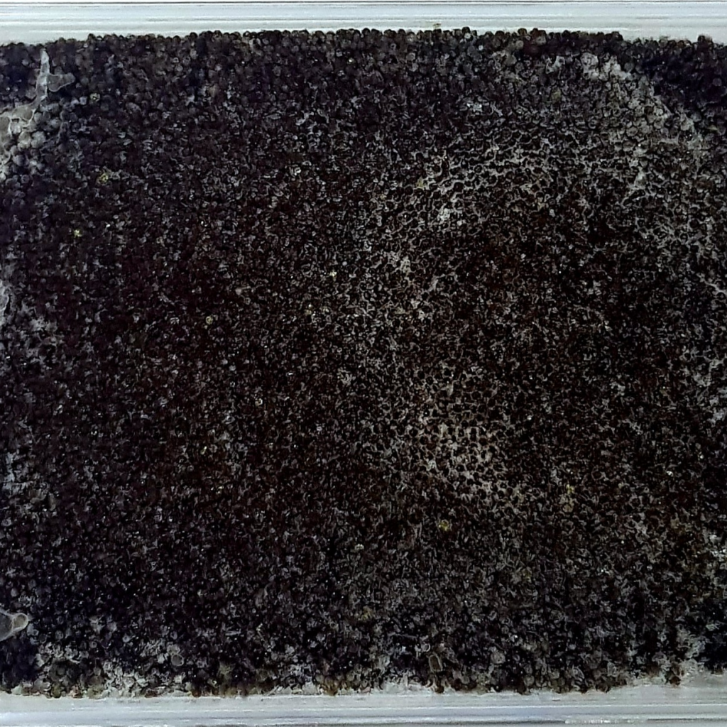 Shiki delivery singapore Premium Japanese Black Squid Ink Tobiko (Flying Fish Roe)