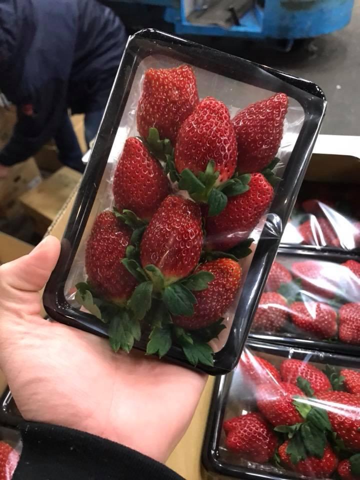 Japanese Strawberry (Ichigo)